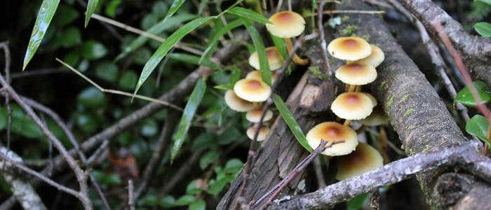 Visita Bosque 13