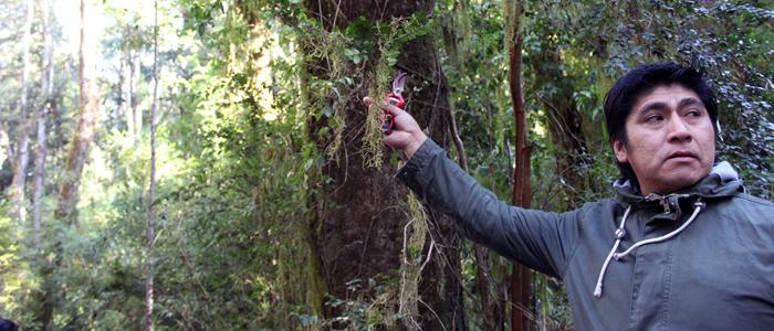 Visita Bosque 6