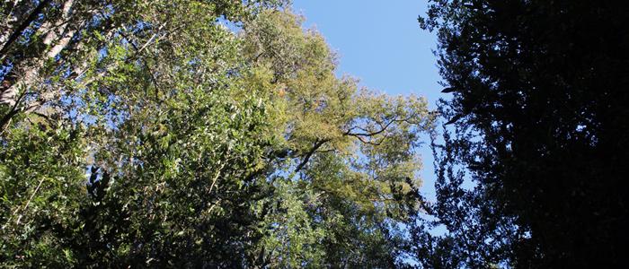 Visita Bosque 7
