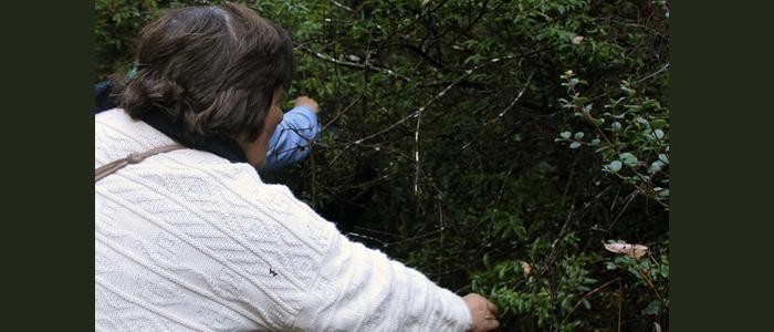 Visita Bosque 8