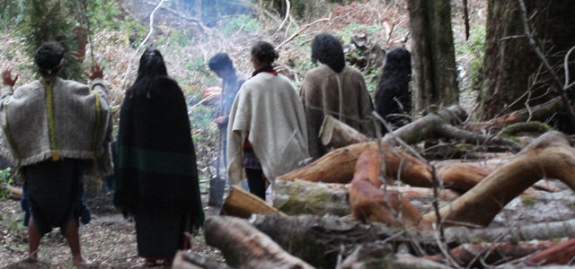 Coñaripe: Comunidades Mapuche levantan rewe para defender humedal